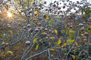 Sornziger Wilde - Wildfruchtspezialitäten